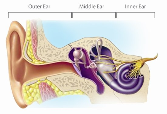 How We Hear Outer Middle Inner Ear Toronto Hearing Centre